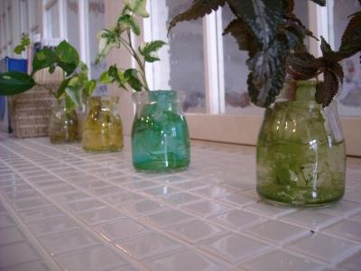 ジーランド店内/植物